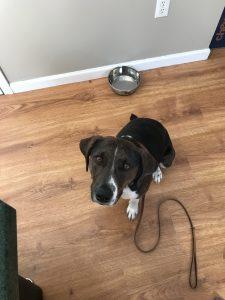 Dog training Poughkeepsie NY
