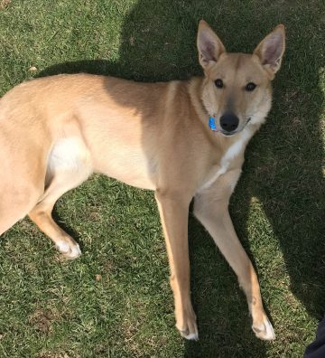 Dog training in Greenwich CT