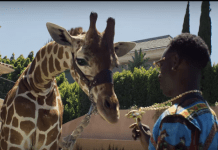 YOUNG DOLPH ROYALTY video , download YOUNG DOLPH ROYALTY , download YOUNG DOLPH ROYALTY video , watch YOUNG DOLPH ROYALTY official video , YOUNG DOLPH ROYALTY official video , YOUNG DOLPH ROYALTY official music video , Stream YOUNG DOLPH ROYALTY , Young Dolph Royalty Mp3 , Stream Young Dolph Royalty , YOUNG DOLPH ROYALTY OFFICIAL MUSIC VIDEO STREAM