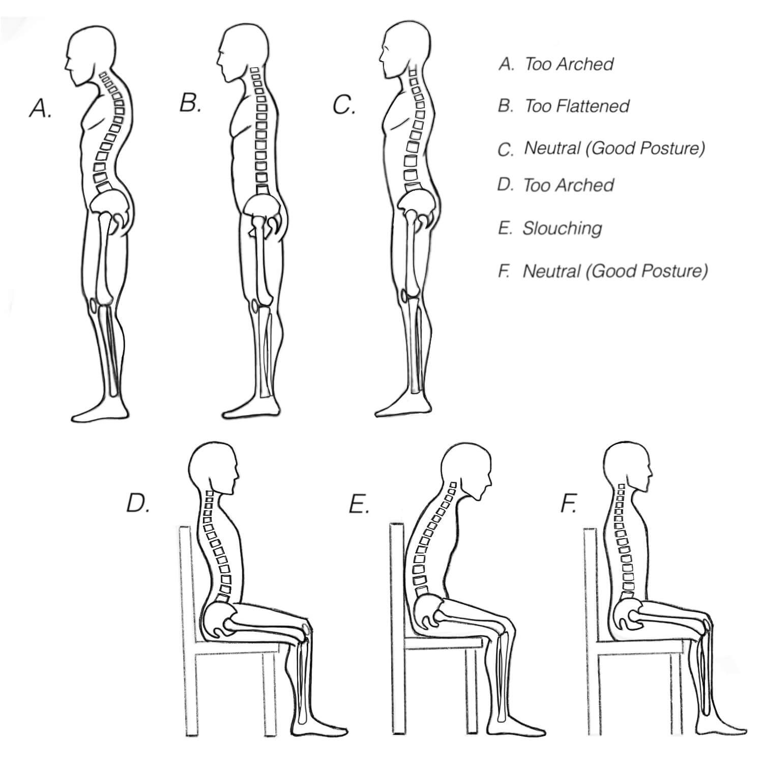 Spine Encyclopedia Anatomy Of The Spine And Spine Ailments