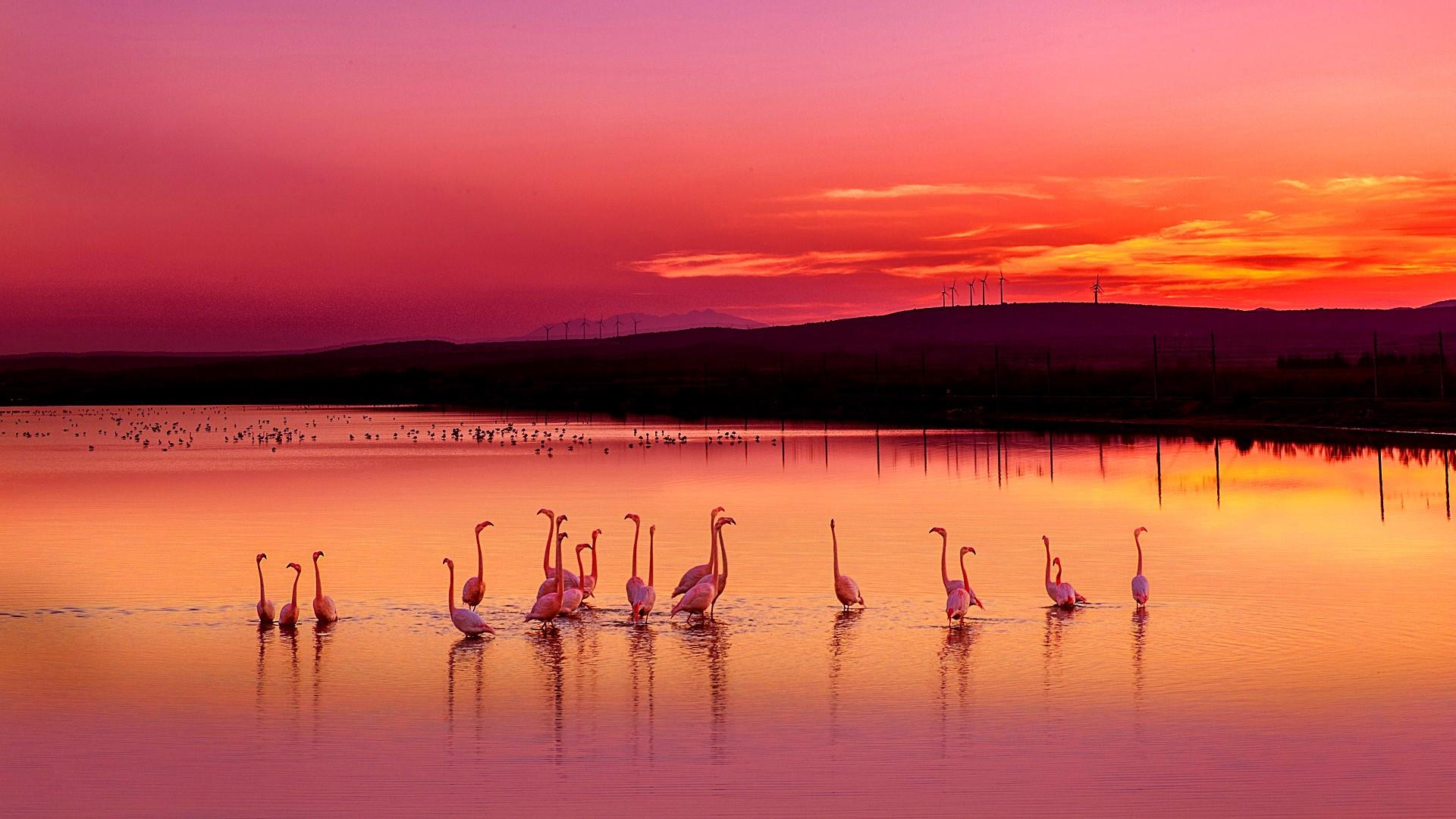 Ultra Hd Car Wallpapers 8k Folder Flamingos In The Sunset At France Hd Wallpaper Backiee