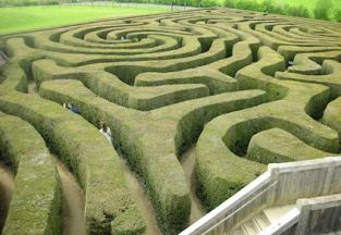 Image: A maze of hedges