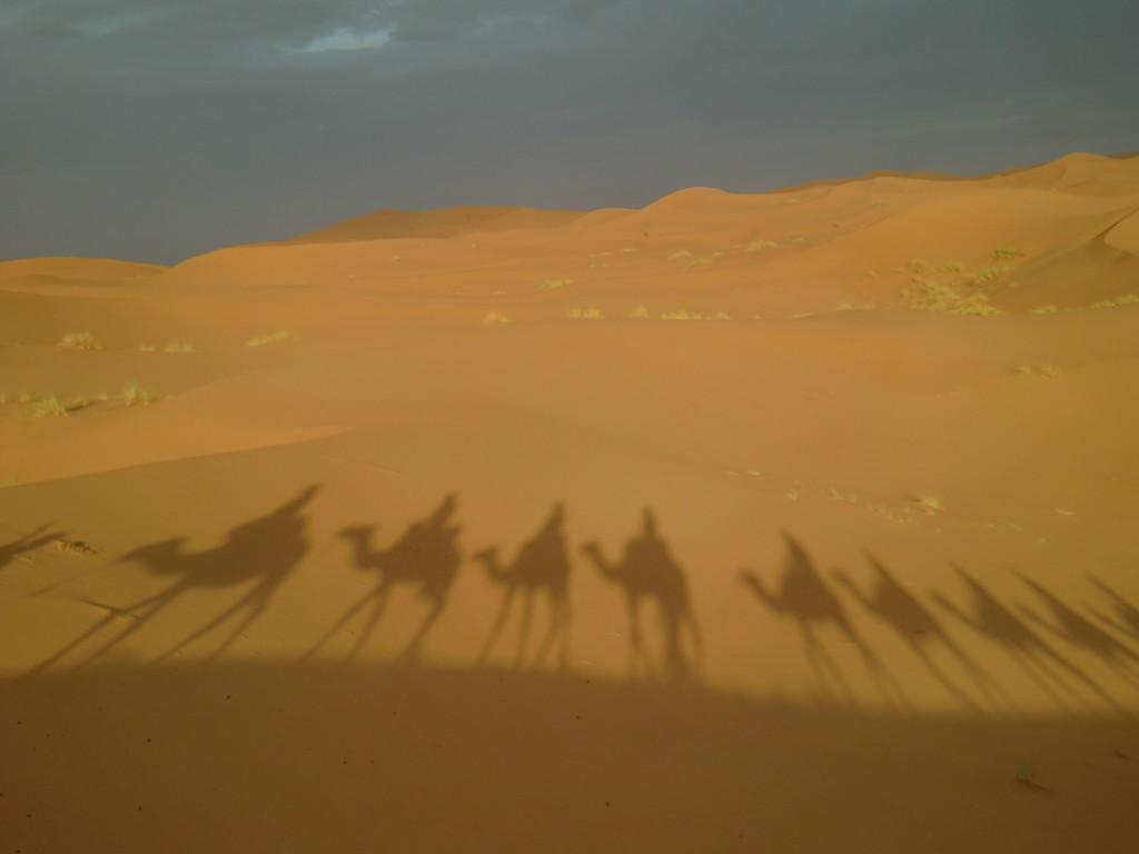 砂漠に映るラクダの影が面白い