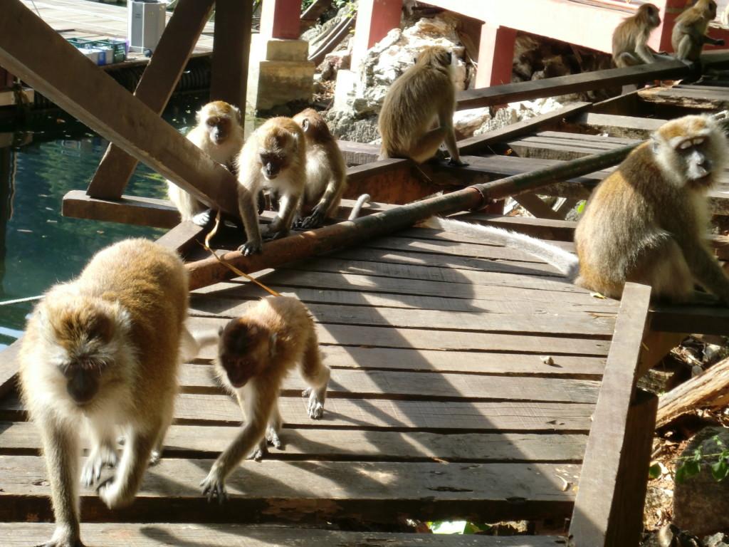 東南アジアで初めて、『ジオパーク』に認定されたランカウイ島