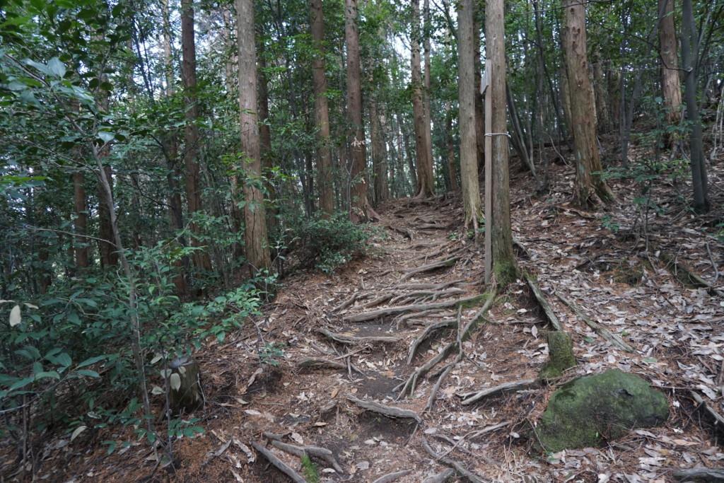森林セラピーロードに選ばれた『花房の滝』