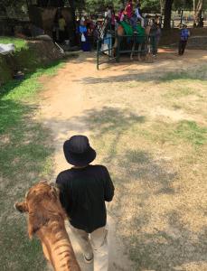 ラグナン動物園 ラクダの上からの写真