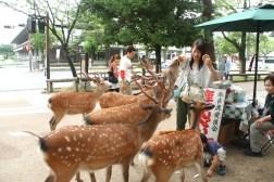 Aggressive deer in Nara