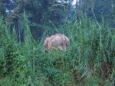 Borneo's Wildlife