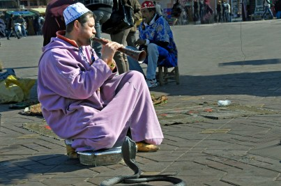Snake charmers ply their trade at Jemaa El Fna