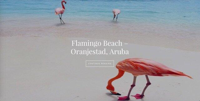 flamingo beach front