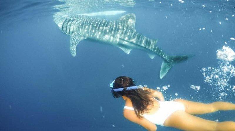 Oslob Whale Shark