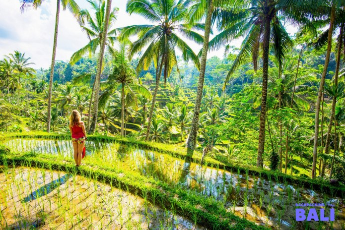 Bali Weather Best Time To Visit Backpacking Tours