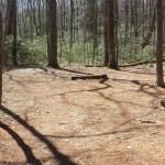 Nipmuck Trail Campsite tent area