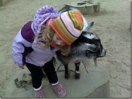 My goat.