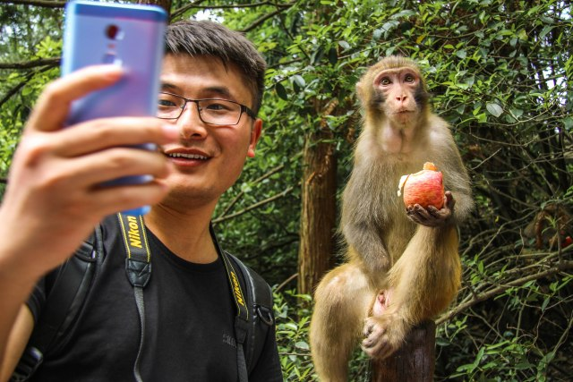 Monkeys in Zhangjiajie National Forest Park, China