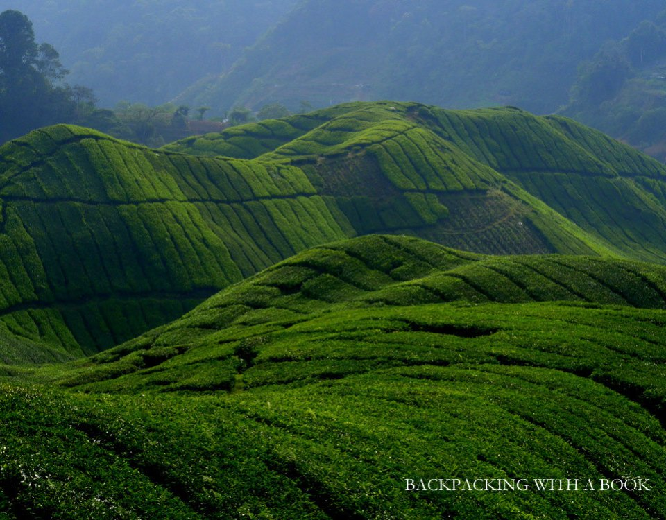 Cameron Highlands Travel Guide