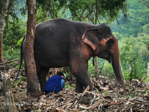 Mahout and Elephants in Laos