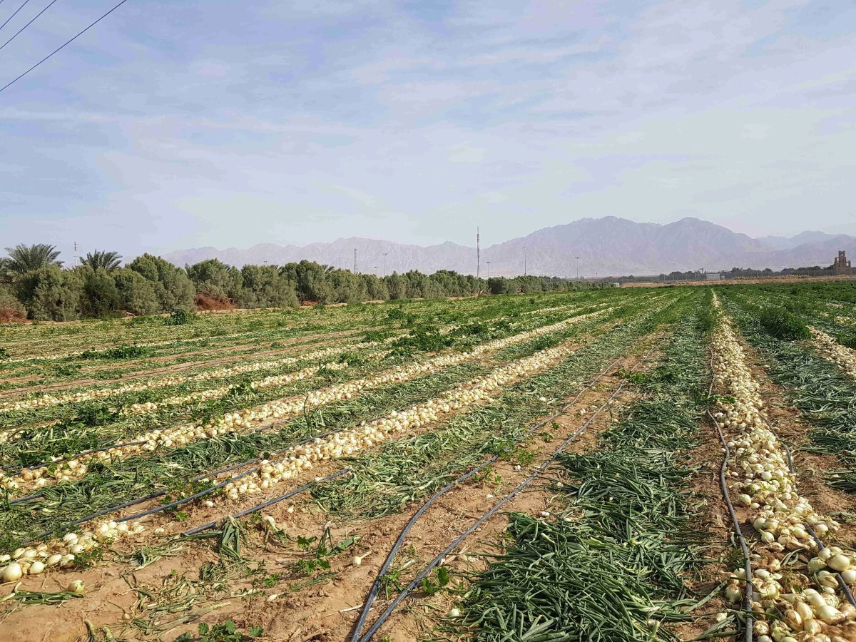 Birds, Agriculture and Ancient Wells Just Outside Eilat