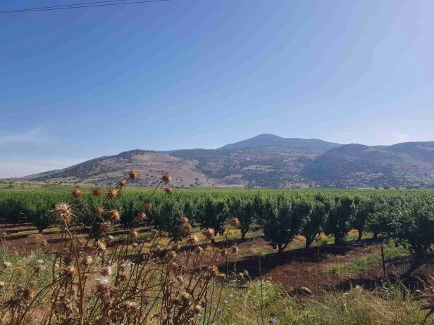 Mount Hermon in the distance on the Israel National Trail