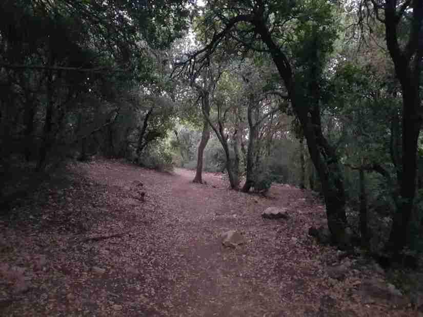 Mount Meron Forest