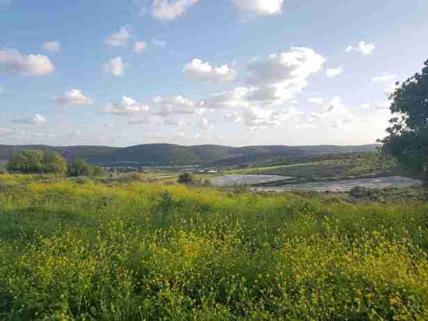 Overlooking Bat Shlomo in a field of yellow flowers on the Ramot Menashe Regional Trail