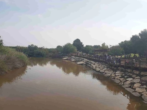 The Turtle Bridge over Alexander Creek on the Israel National Trail