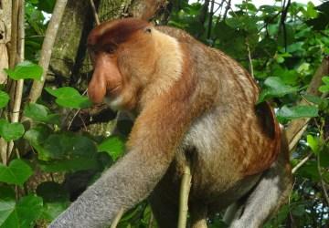 Traveldiary: Borneo week 18