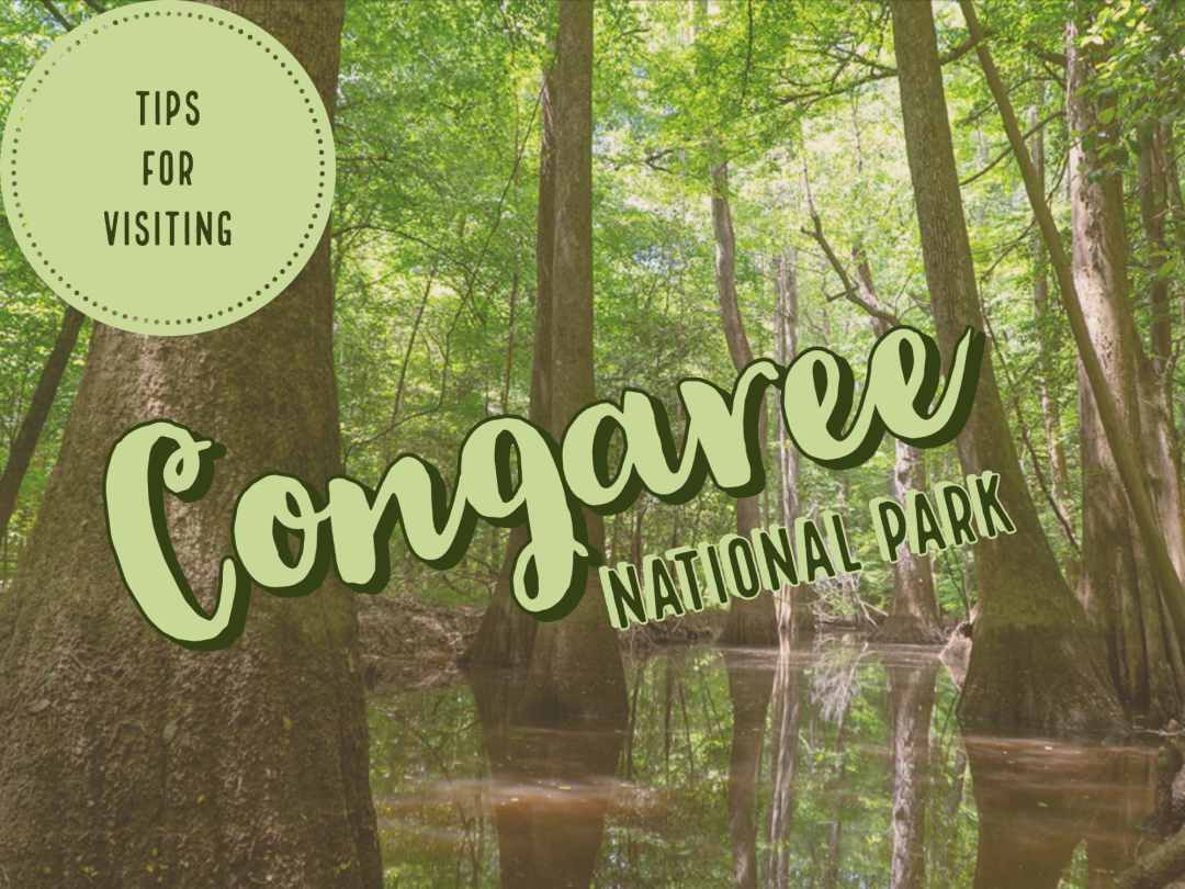 Congaree National Park Cover Photo