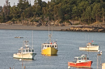 Lobster Boats At Anchor