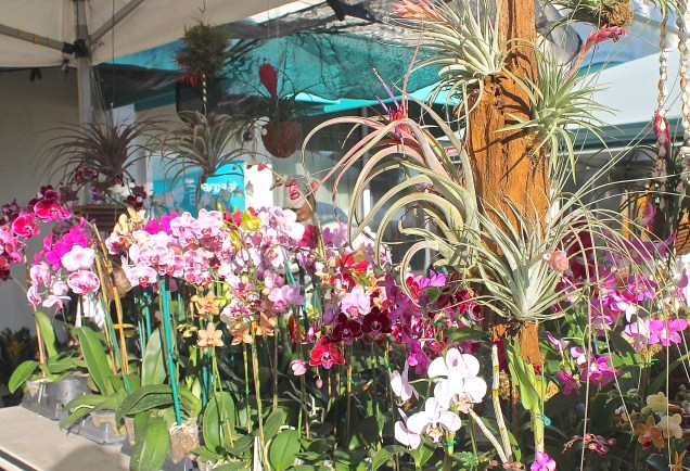 Orchids And Air Plants