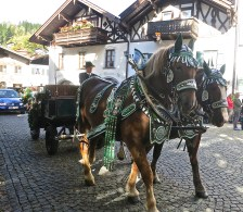Horses And Carriage Decorated For The Wedding Ceremony