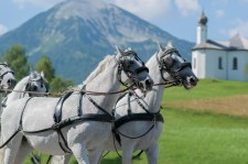 If The Weather Is Nice, A Carriage Ride Would Be Memorable
