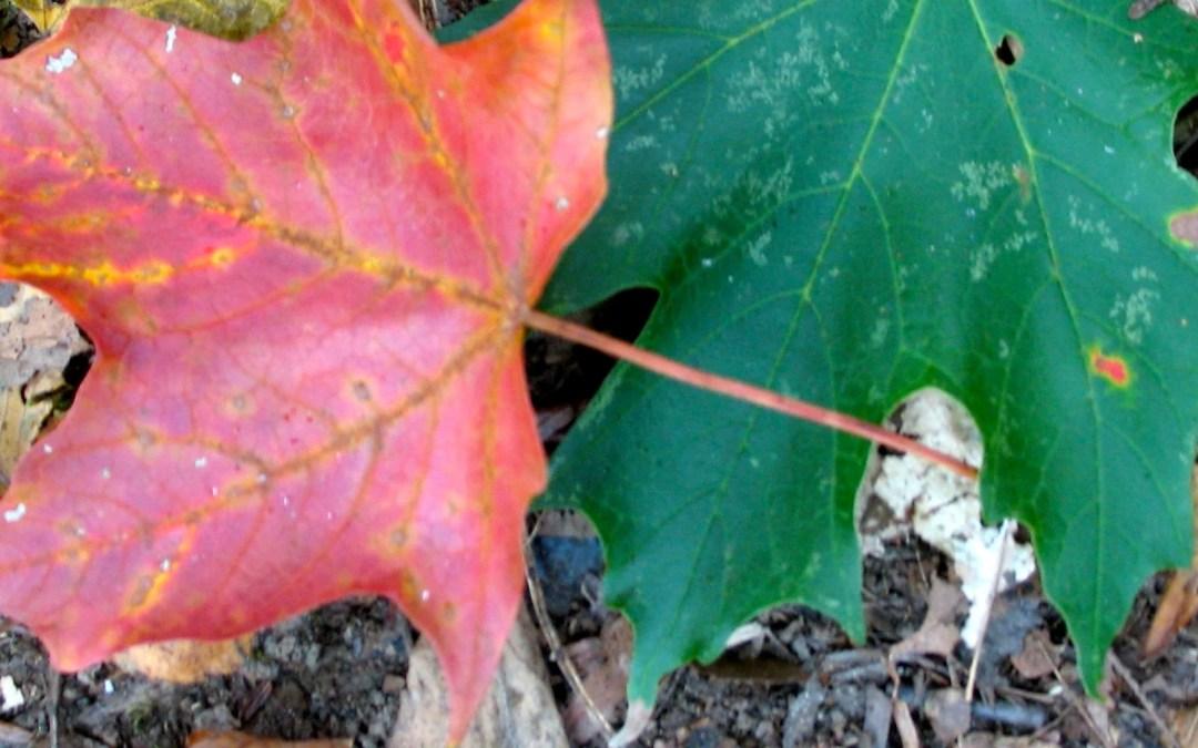 Retro Roadtrip: Appalachian Autumn Part 2