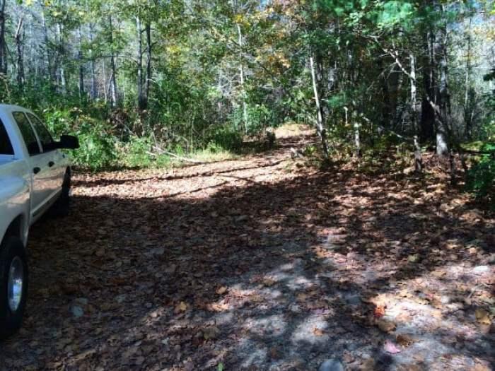 Trail to Sea Creek Falls