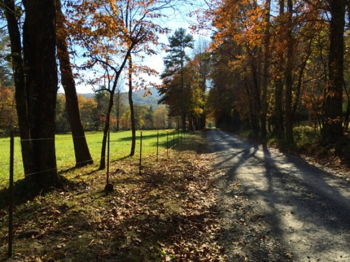 Autumn Road Georgia