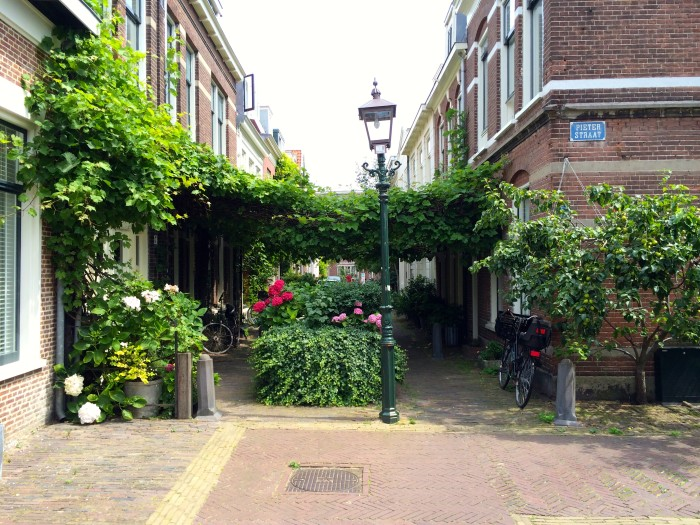 Alley gardens in Haarlem, Netherlands.