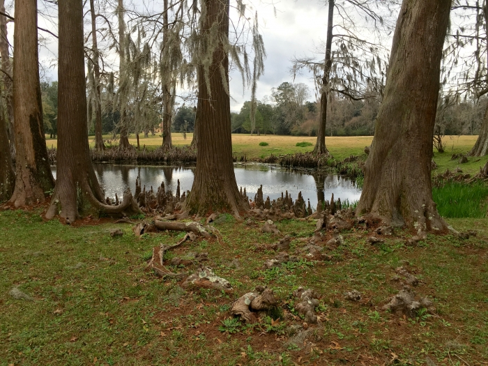 IMG 1349 - Visit Historical Natchez, Mississippi