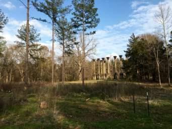 Windsor Ruins Mississippi