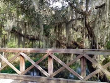 IMG 0250 - 8 Living History & Historical War Reenactments in Florida