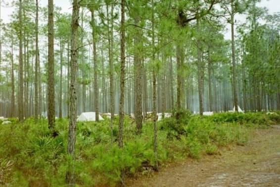 Olustee Battle Reenactment Florida