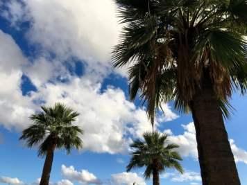Palms Phoenix Arizona