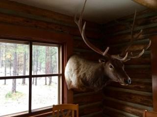 Hannagan Meadow Lodge Elk