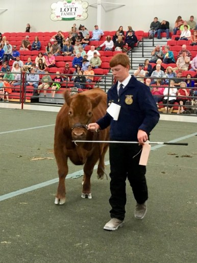 Nathan Hood Rusty Steer