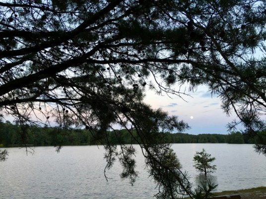Trap Pond Delaware