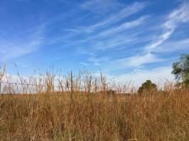 Kansas roadside prairie grass and fence