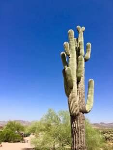 IMG 2770 e1491314875123 - A Day Trip on the Arizona Apache Trail