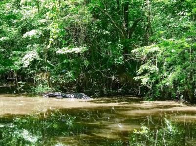 IMG 5229 - Explore Ascension Parish, Louisiana