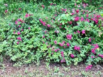 IMG 5668 - Franklin, North Carolina: A Smoky Mountain Adventure