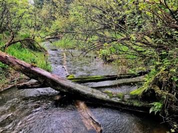 IMG 3591 - Tillamook: A Drive Along the North Oregon Pacific Coast
