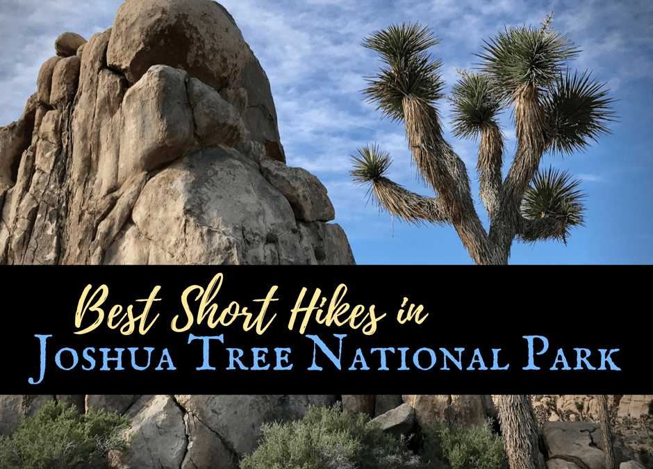 Best Hikes in Joshua Tree National Park on a One-Day Trip